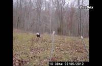 ده شکار ناموفق عقاب ها
