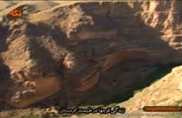 زندگی قوچها در طبیعت کردستان