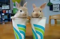 خرگوش های بازیگوش!!!