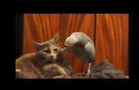 ۲۰-دانلود بهترین سوتی های باحال و خنده دار حیوانات :)