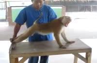 میمون ورزشکار