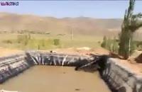 نجات گرازها از داخل استخر پر از آب+فیلم ویدیو کلیپ جالب