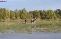 اسکی روی آب با اسب_آخر خنده