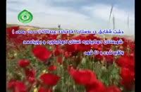 دشت شقایق استان کهگيلويه و بويراحمد