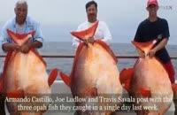 بزرگترین ماهی جهان