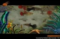 گونه های جانوری: گوپی