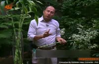 گیاه زیبای بامبو
