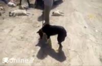 سگ كشي در شيراز