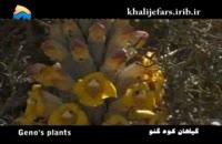 گیاهان کوه گنو