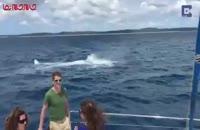 نهنگ عکس عروس و داماد را خراب کرد .