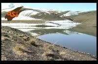 گونه هاي جانوري: حواصیل سفید