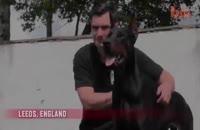 سگ ترین سگهای نگهبان