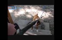 حرکات جالب حیوانات :)