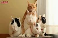 گربه هایی با رفتار دیدنی پیشی ملوس ناز