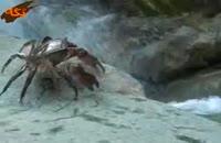 طبیعت وحش قزوین