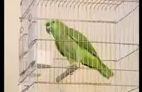 پرندگان سخنگو
