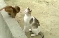 بازی خنده دار گربه و میمون