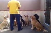 غذا خوردن سگ های باتربیت